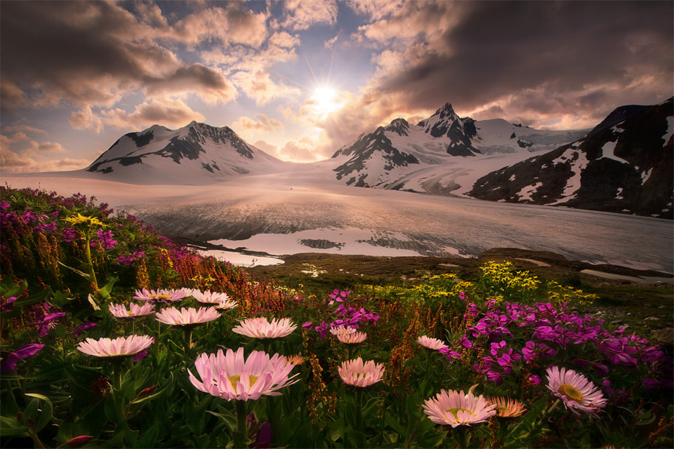 Самые красивые картинки природа цветы
