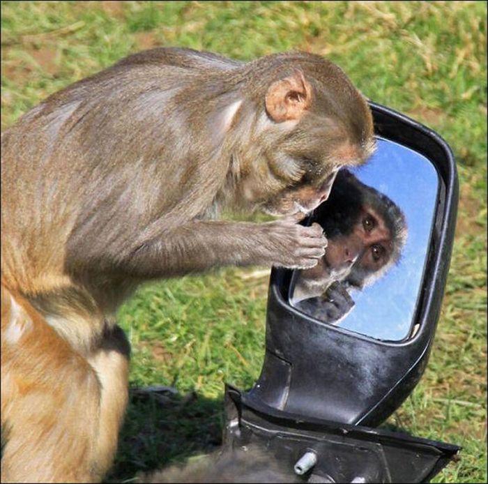 Гримерное зеркало с лампочками картинки быстро первую