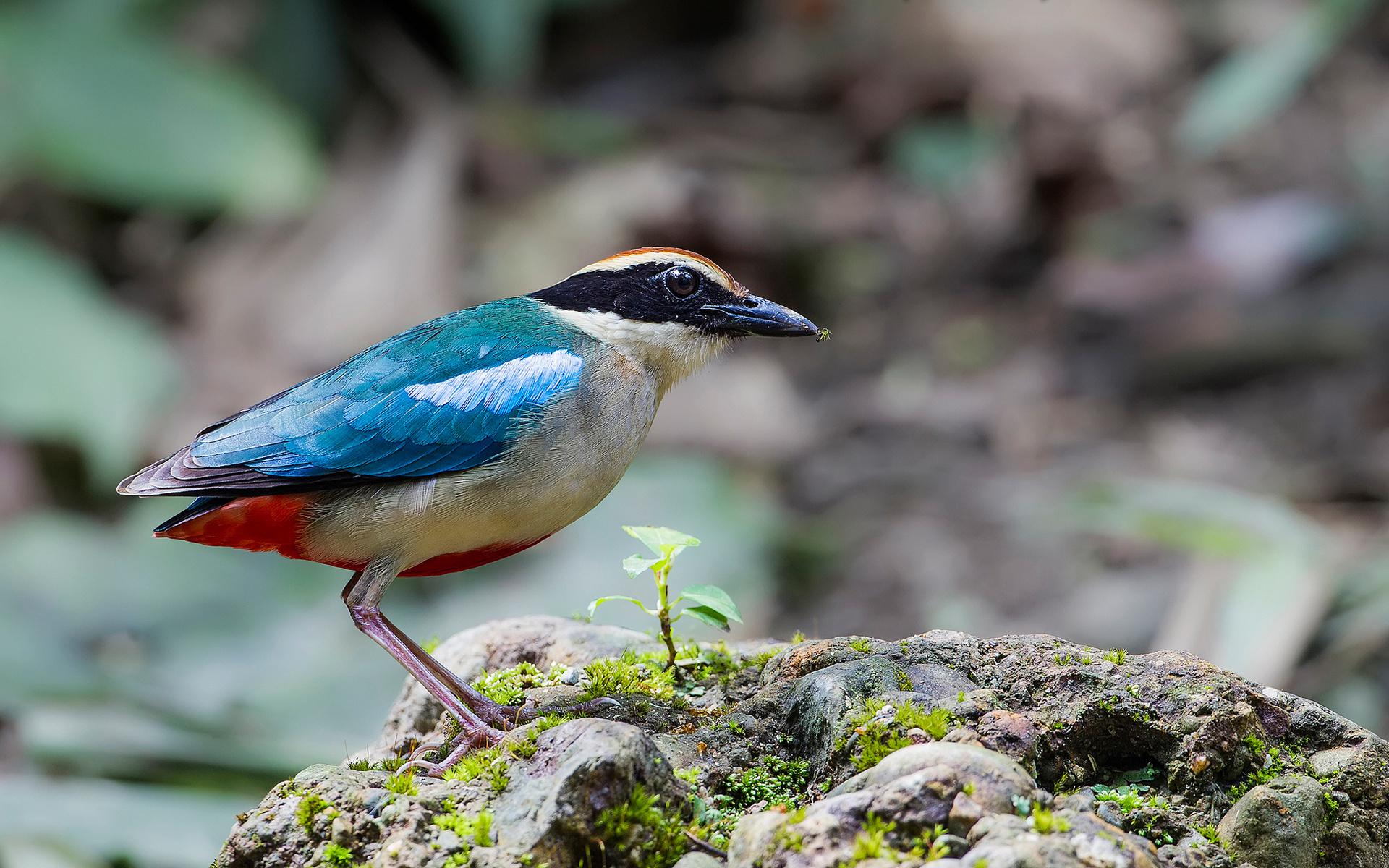 Фотографии птиц вблизи