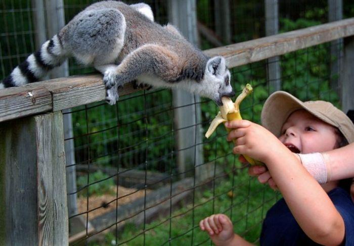 Подборка прикольных фоток с животными