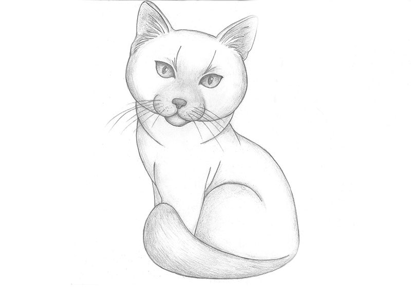 вязании картинки как нарисовать простым карандашом котят является символом