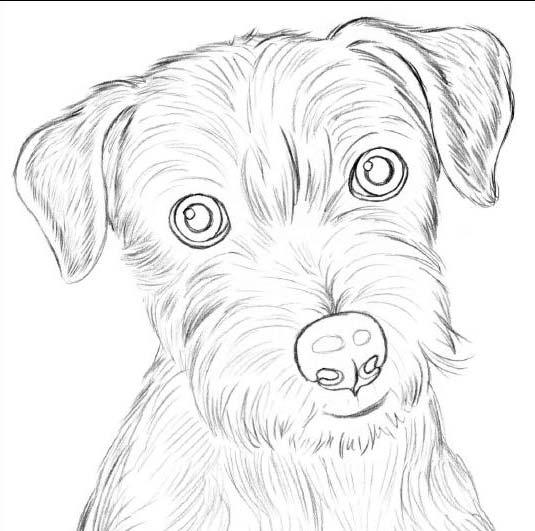 Морда собаки простым карандашом