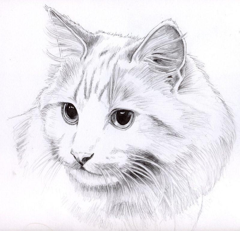 Картинка котика для срисовки карандашом