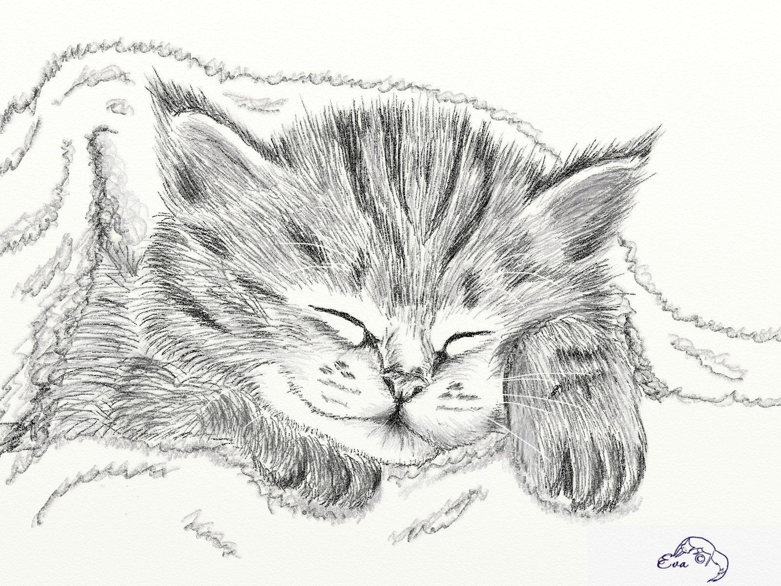 Красивая картинка котик для срисовки