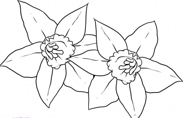 цветы картинки карандашом простые