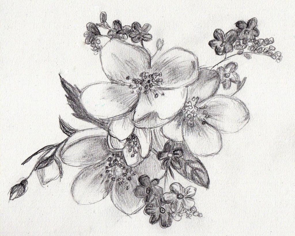 Картинки на срисовку цвети