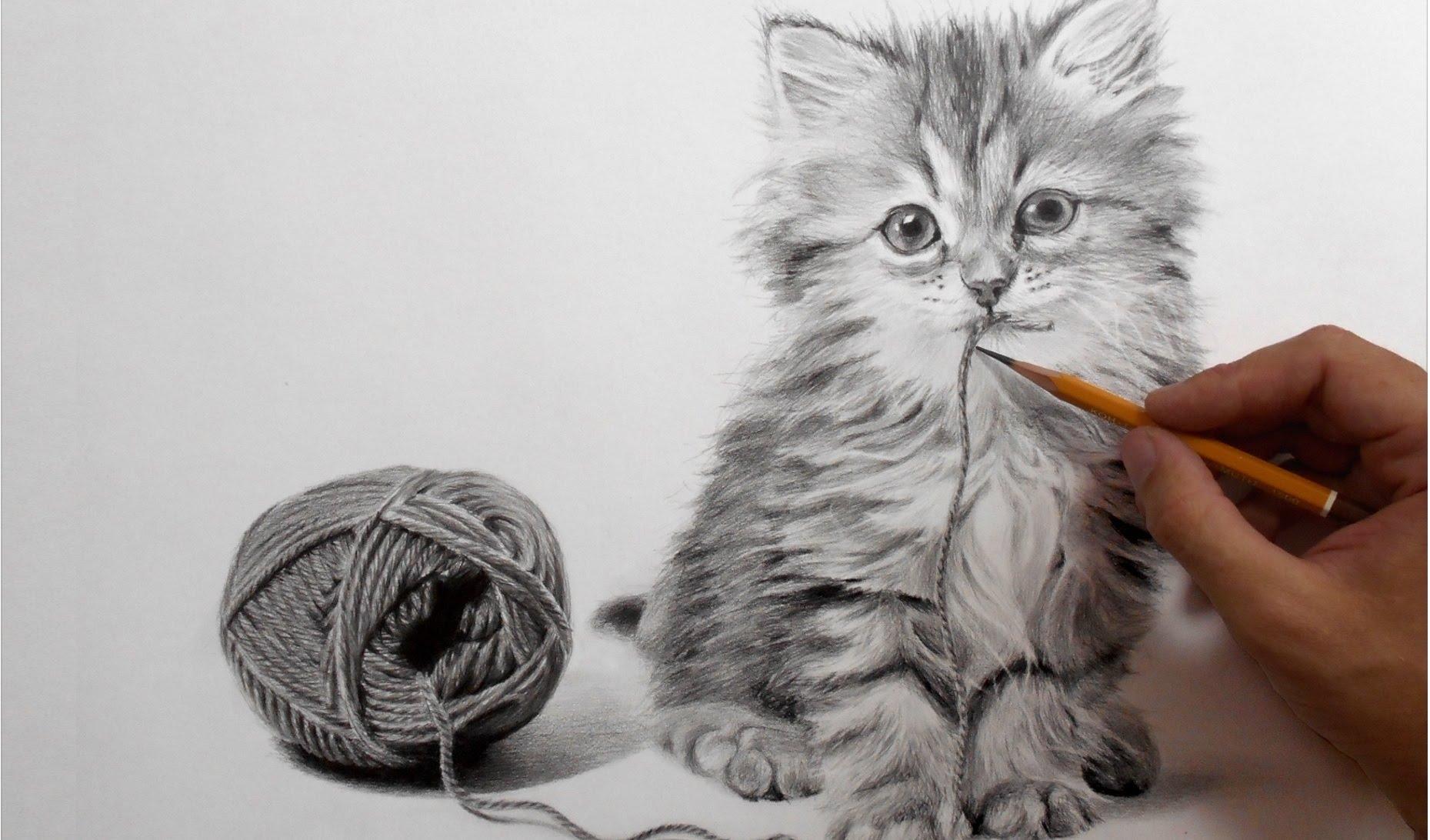 находятся нарисованы карандашом котики картинки проснулась