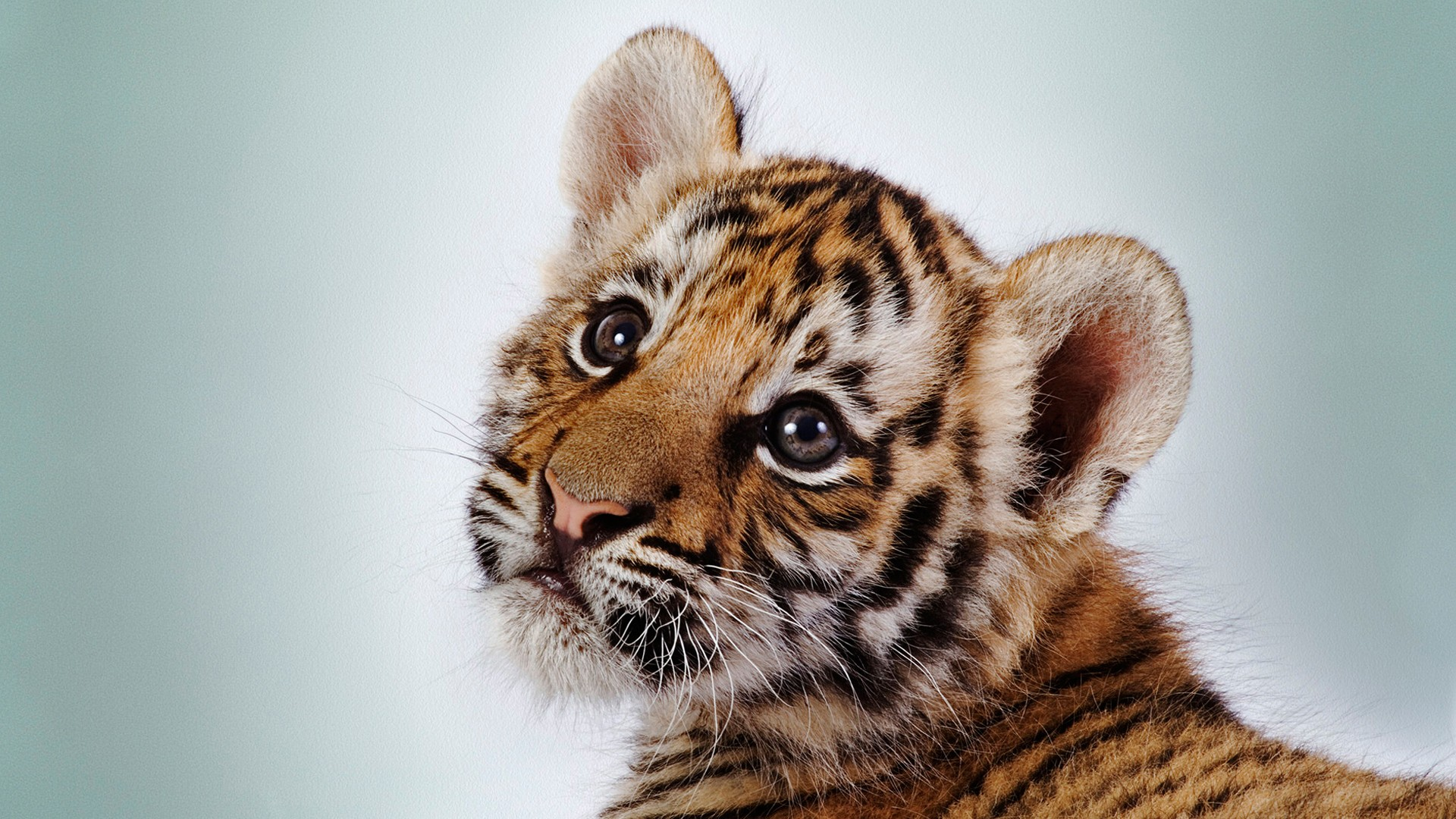 Красивые фото животных на телефон