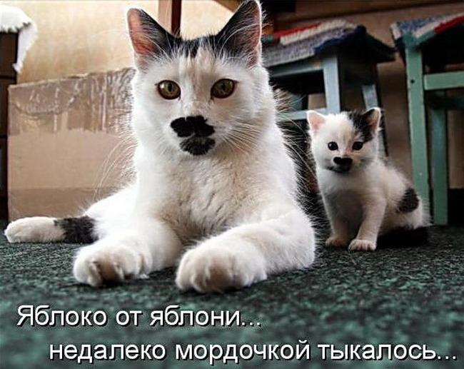 Самые смешные картинки животных с надписью