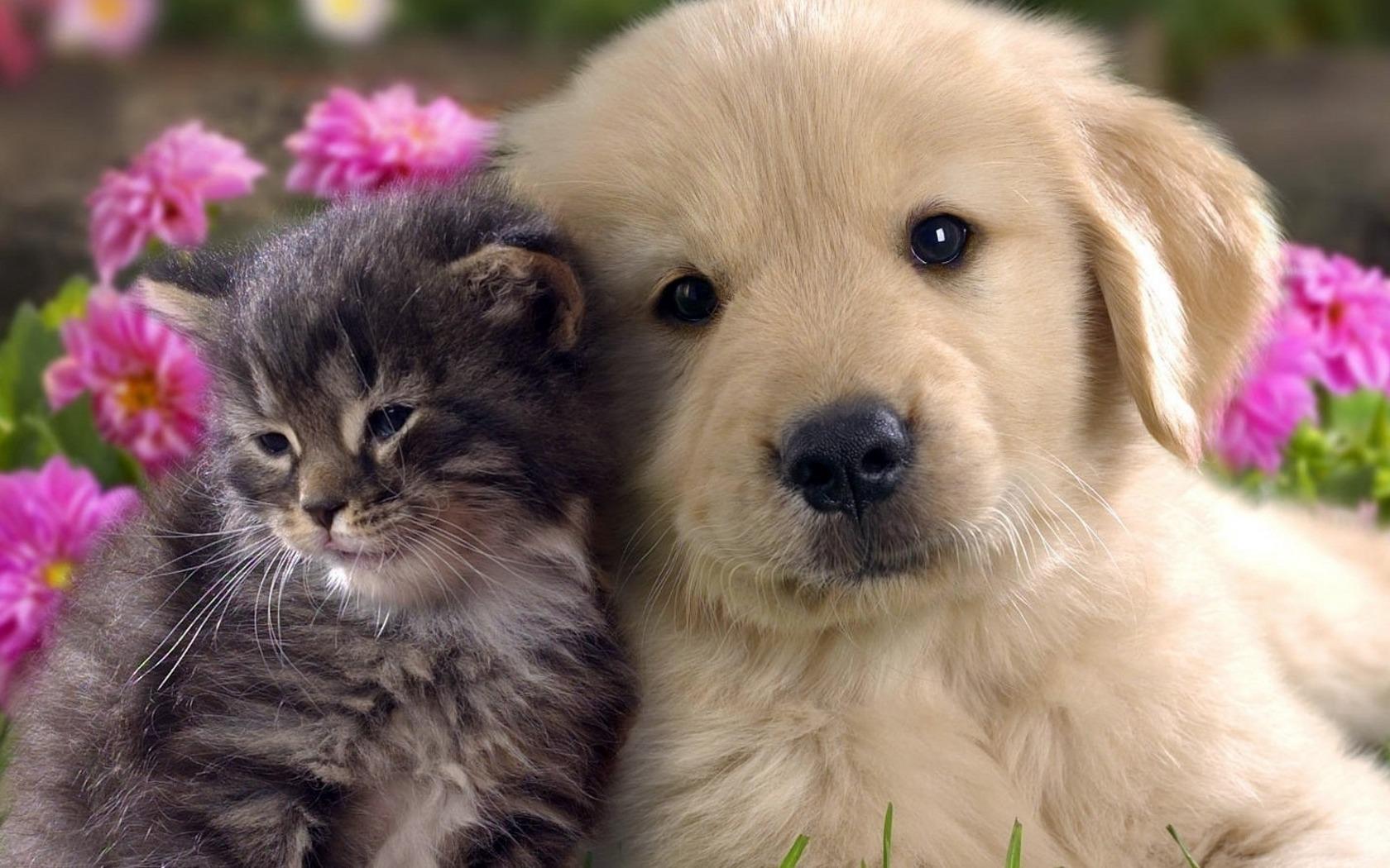 Интересные картинки про домашних животных