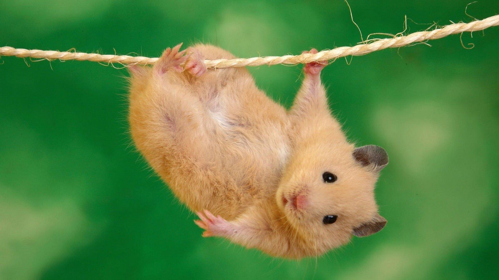 Картинка мышь все будет хорошо
