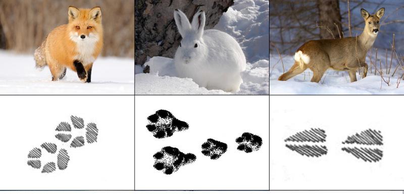 после картинки со следами животных с названиями мало оценивать только