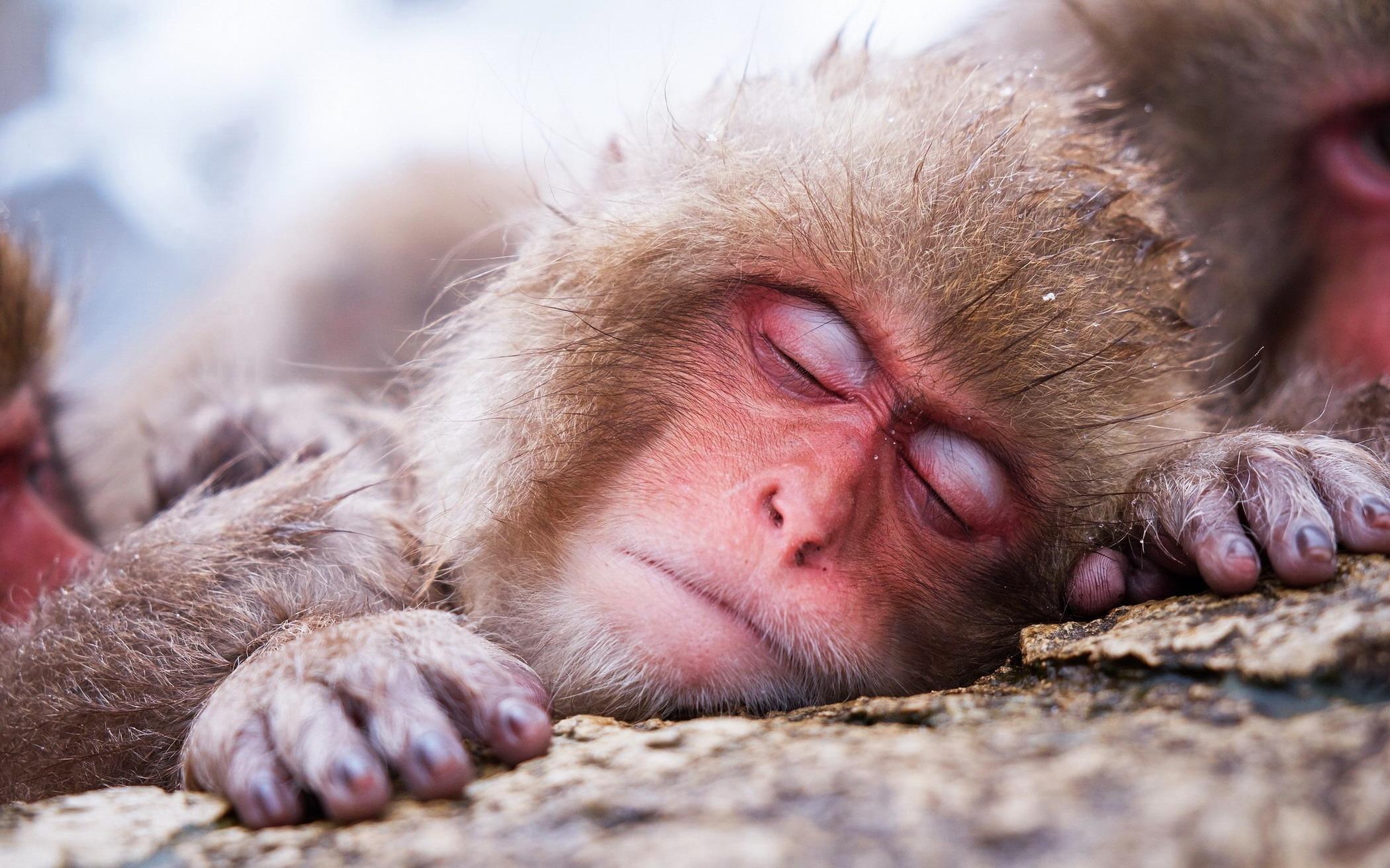 смешные фото спящих животных наклейки актуальны для