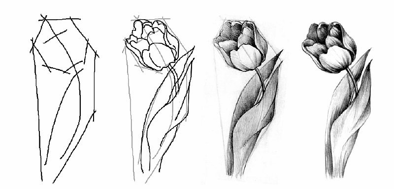 уроки рисования карандашом поэтапно фото