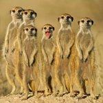 Картинки с дикими животными