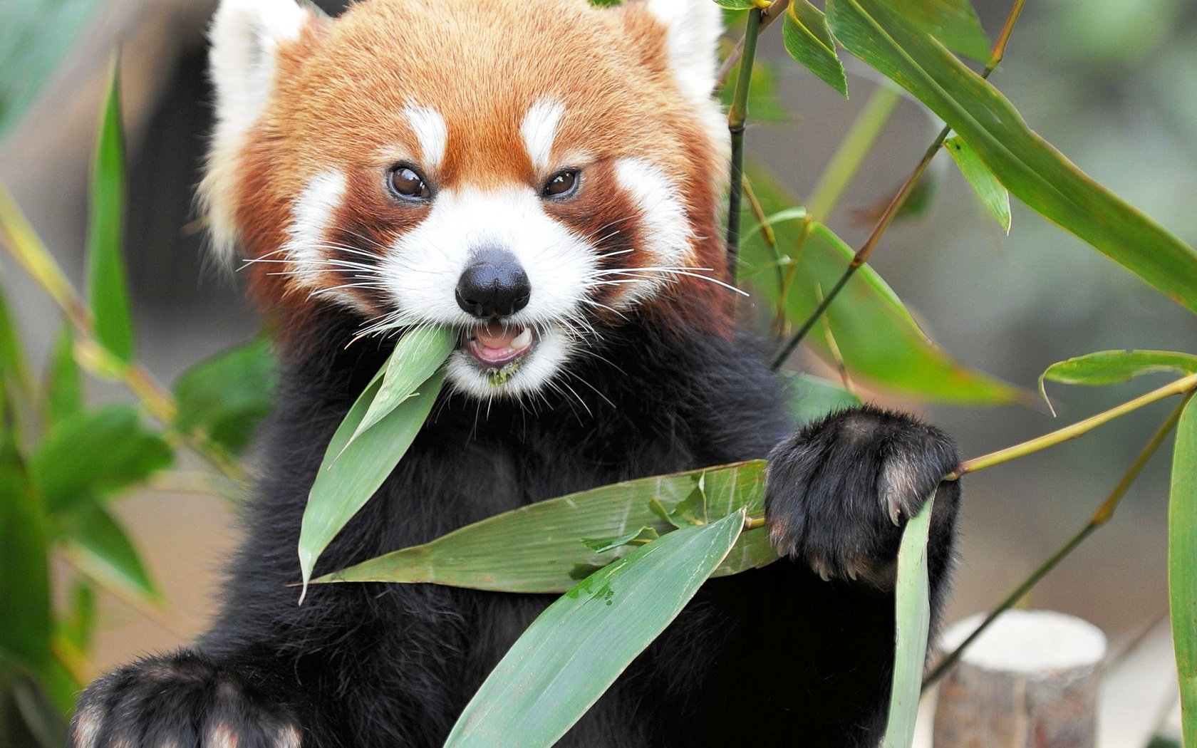 первую красивые картинки животного мира этого можно