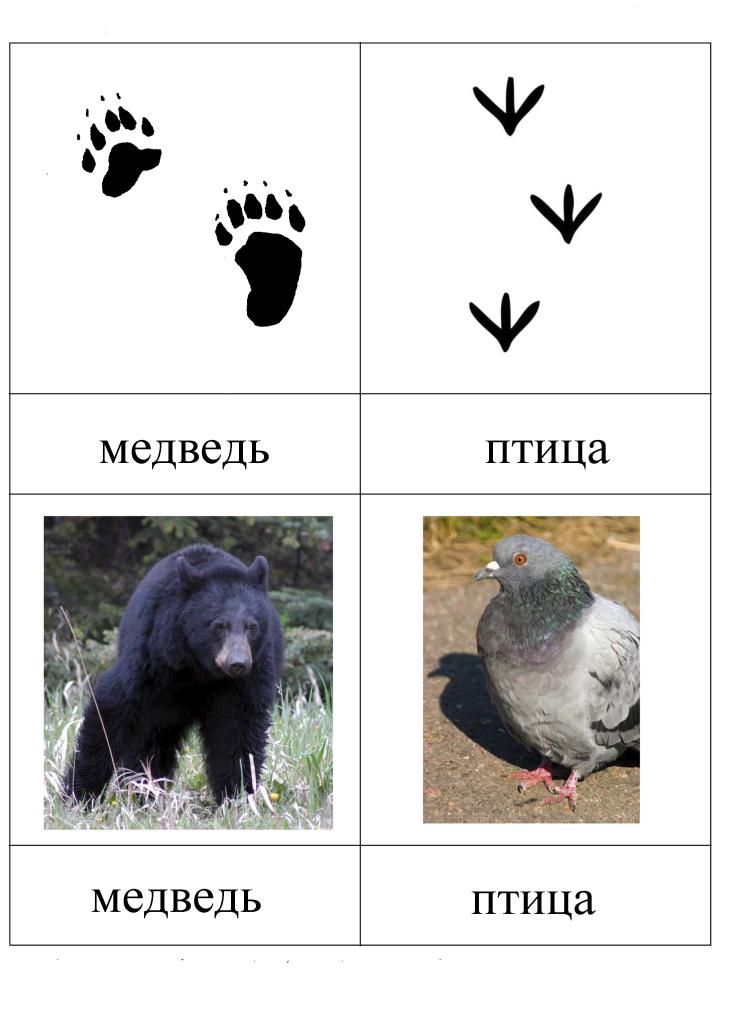 Следы животных птиц картинки