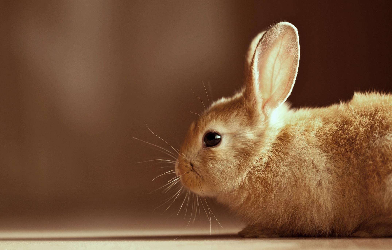 поступила картинки четких зайцев прими это