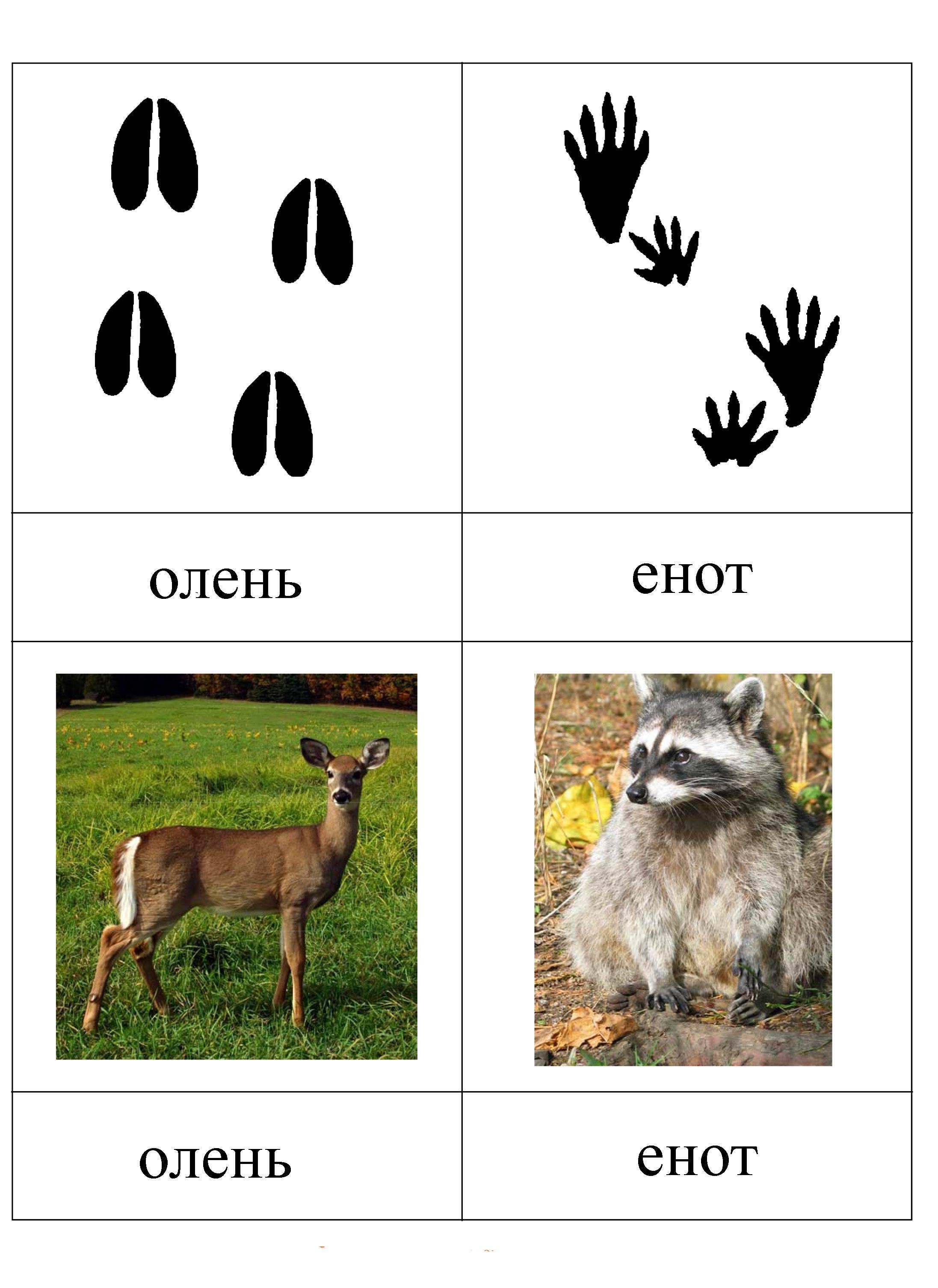 Картинки следы диких животных
