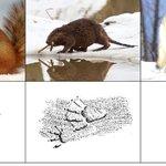 Картинки для детей «следы животных»