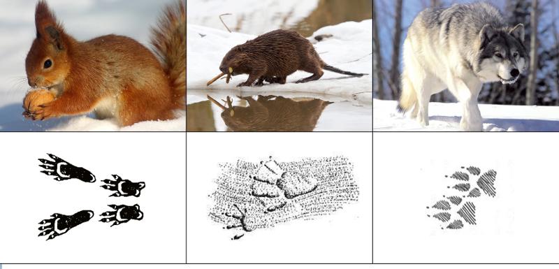 про картинки следы диких животных них трое детей