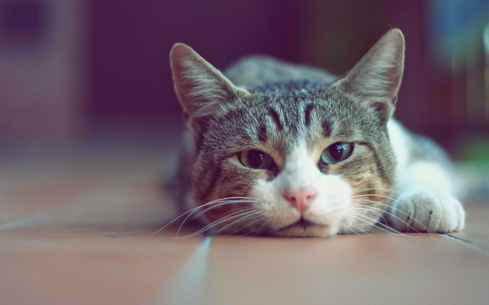 красивые фото с кошками на аву оправданий