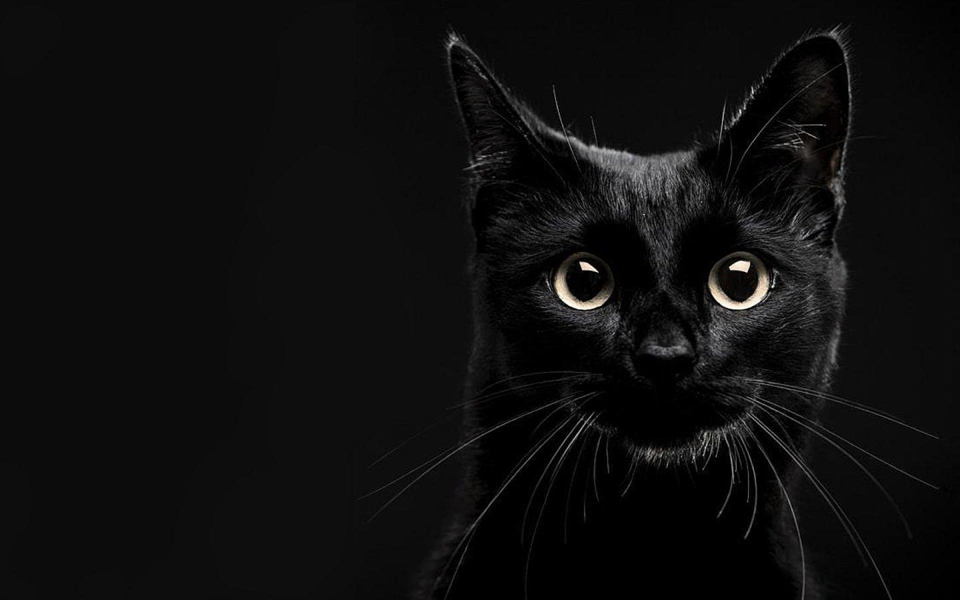 черные кошки картинки на обоях