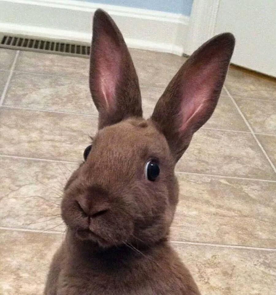 Картинка с надписью заяц