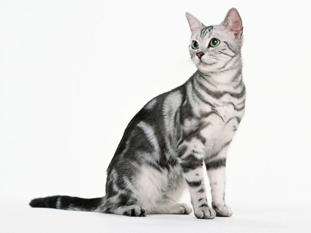 Кошка сидит картинки для детей