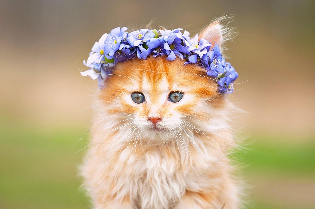 Милые цветочки картинки