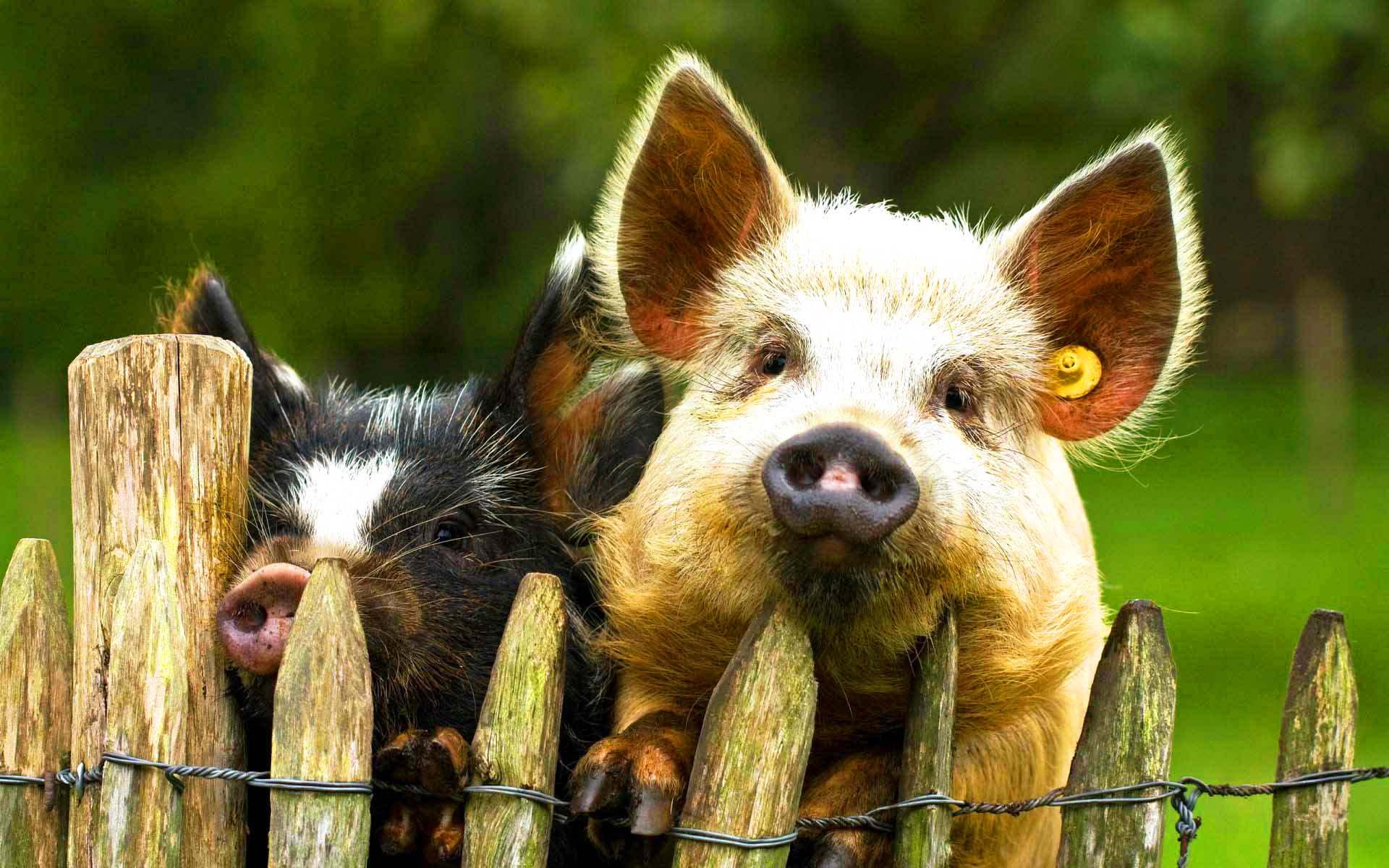 открытки животные прикольные