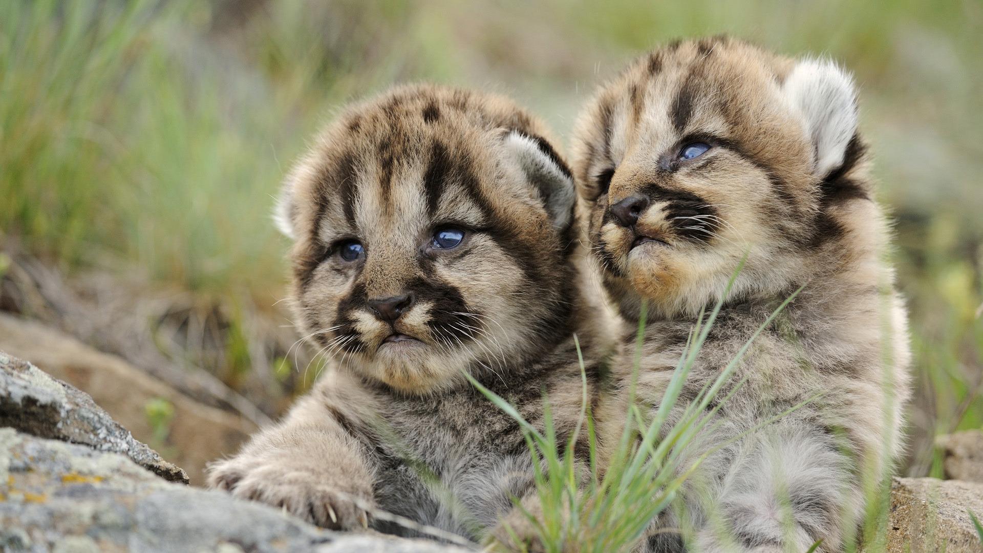 фото животных с детенышами на обои телефона юлия взяла
