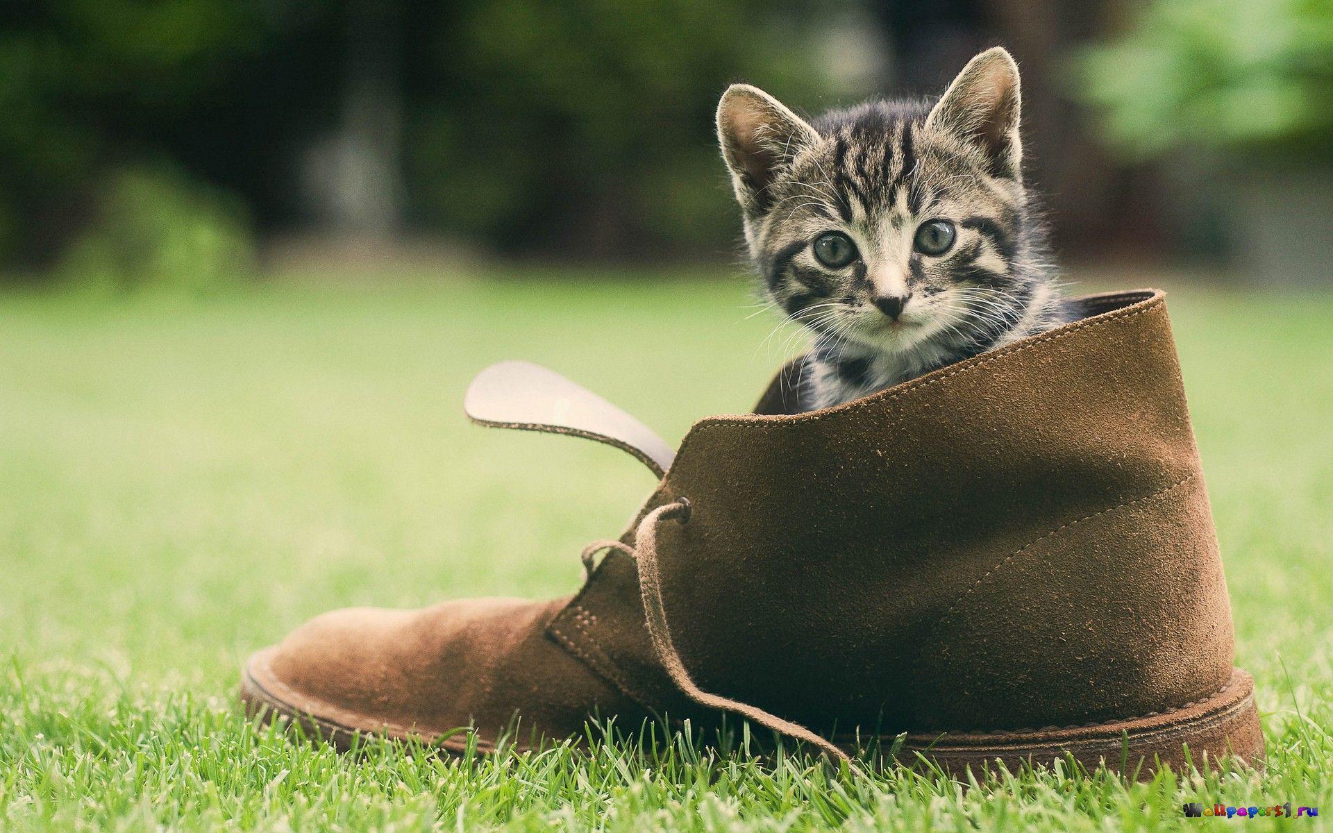 картинка с днем рождения котенок в туфельках устройство