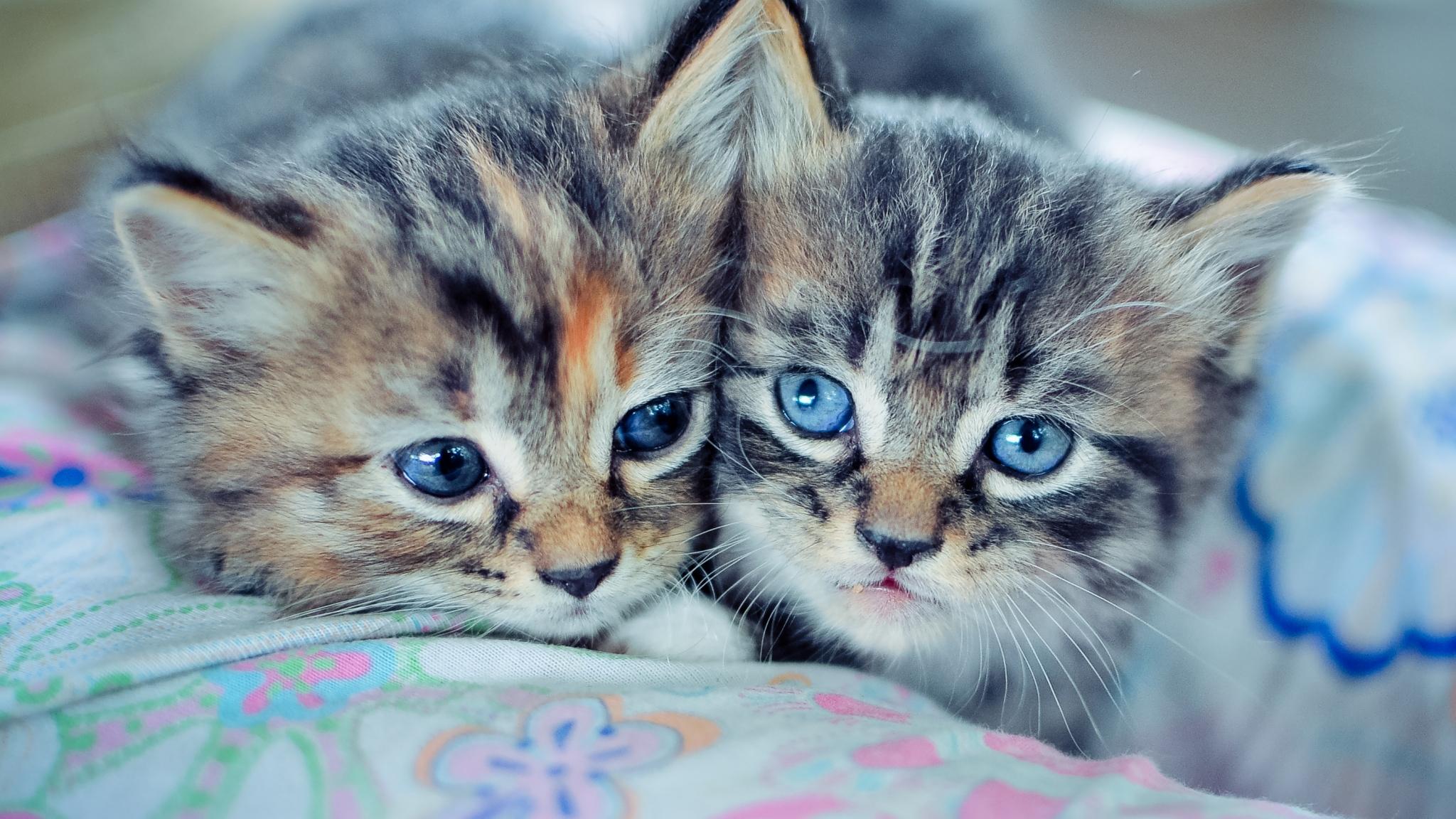 Картинки котят красивые и милые