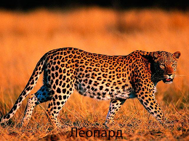 Фото приколы про котов (50 штук) - Приколы