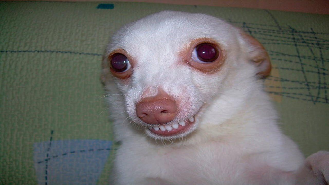 ржачные фото до слез про животных например