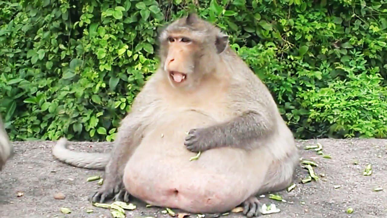 самые смешные картинки в мире до слез про животных эти