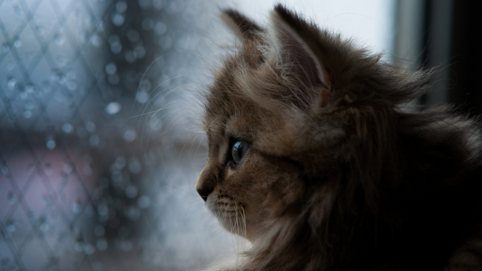 картинка с кошкой на хорошей погоде модели