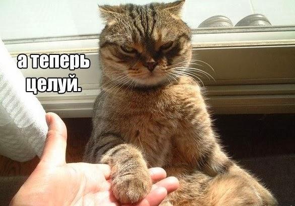 смотреть смешные картинки с надписями про кошек