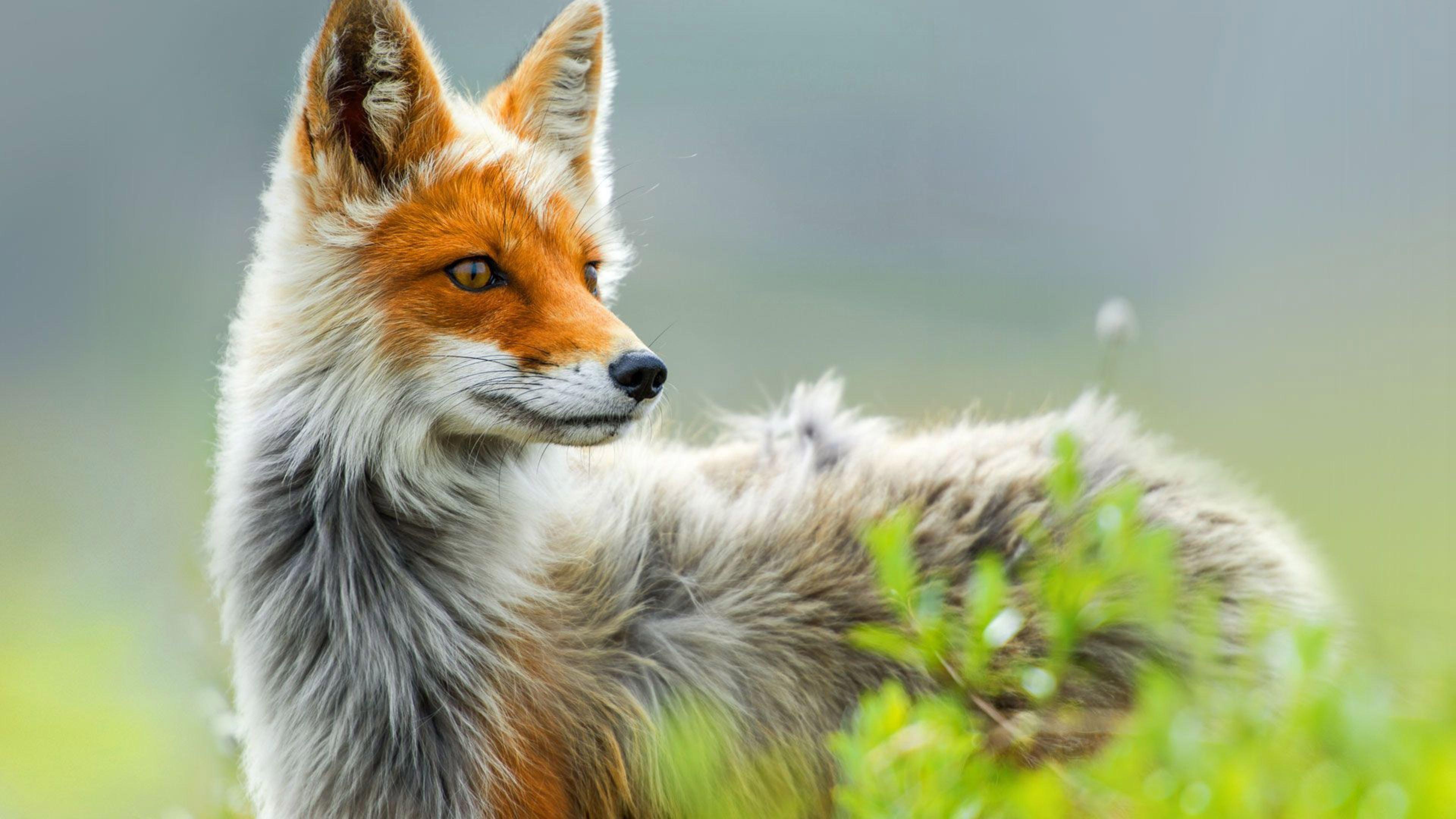 знаем, фото красивых животных на обложку предложен