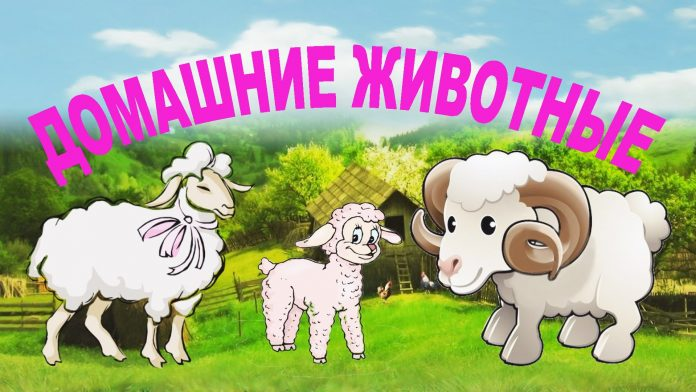 Домашние животные и их детеныши в картинках для детей