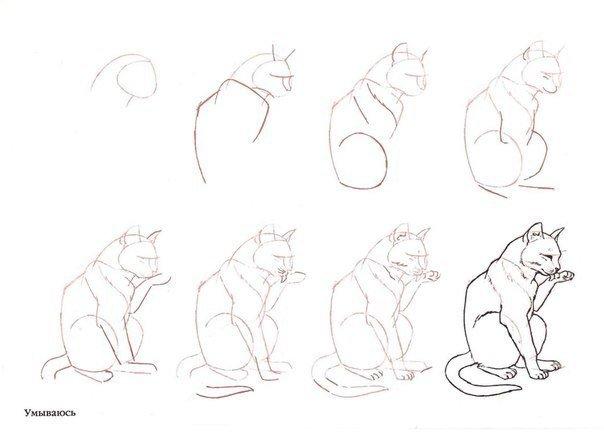 Как рисовать животных поэтапно