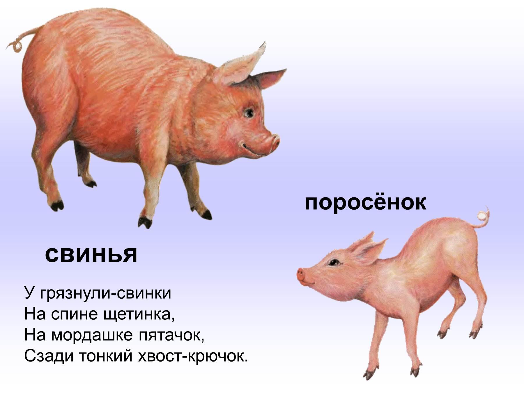 Картинки животных во весь рост говяжьей