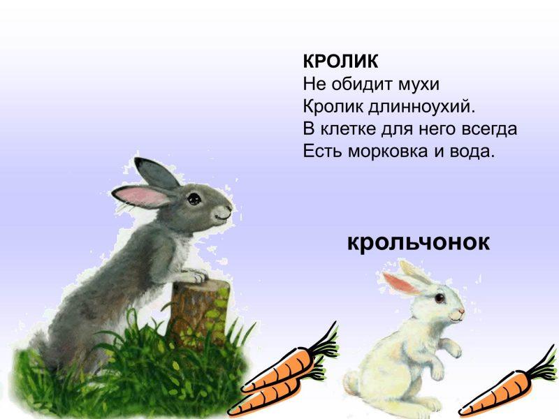Картинки домашних животных и их детенышей