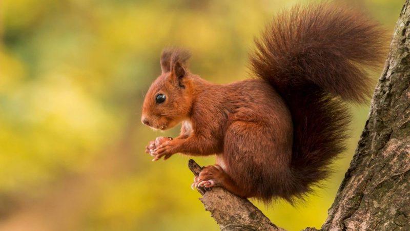 Картинки животных леса
