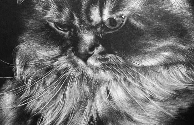 Черно-белые картинки животных