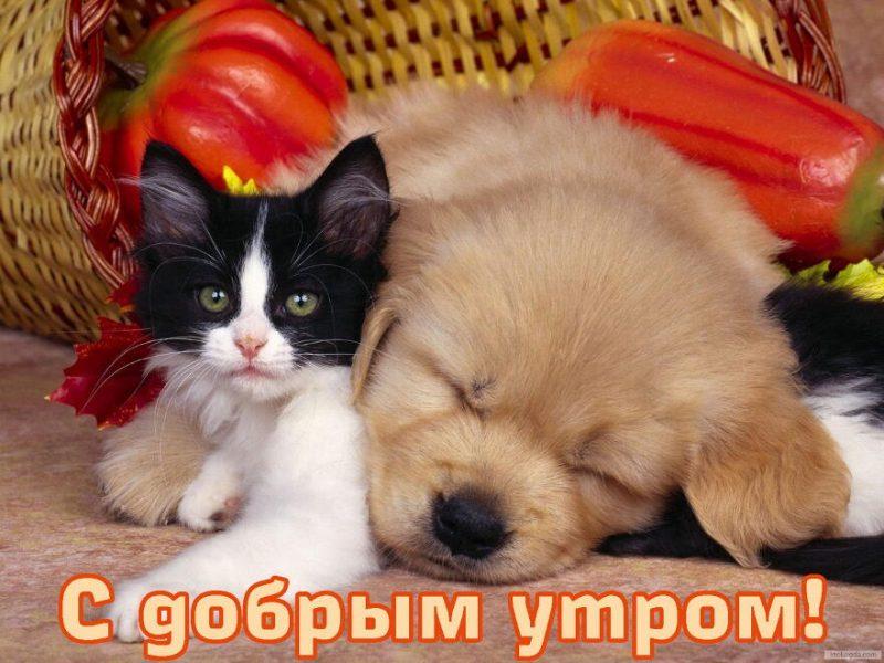 """Картинки с животными """"доброе утро"""""""