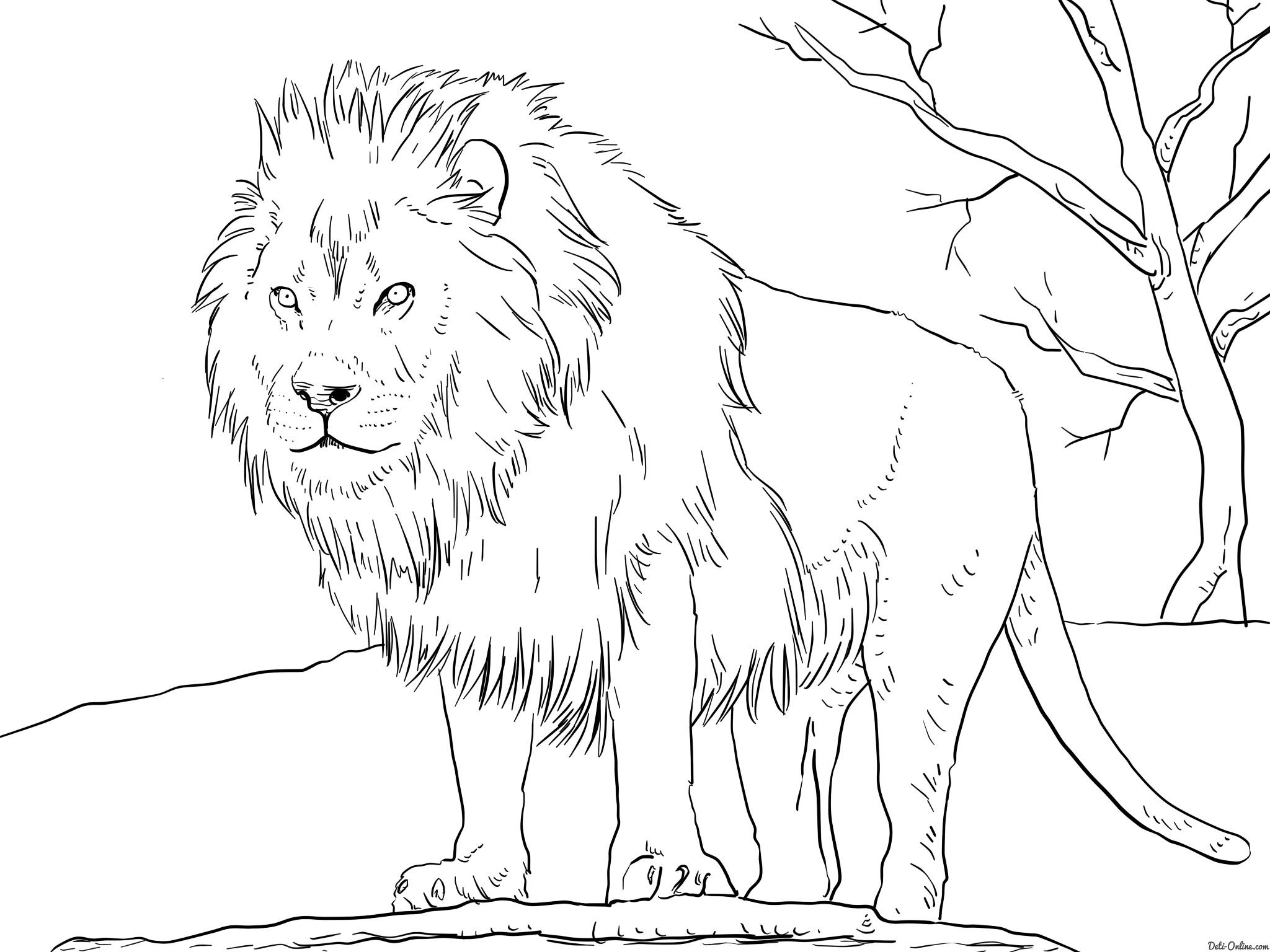 спорта рисунки животных печать плотной