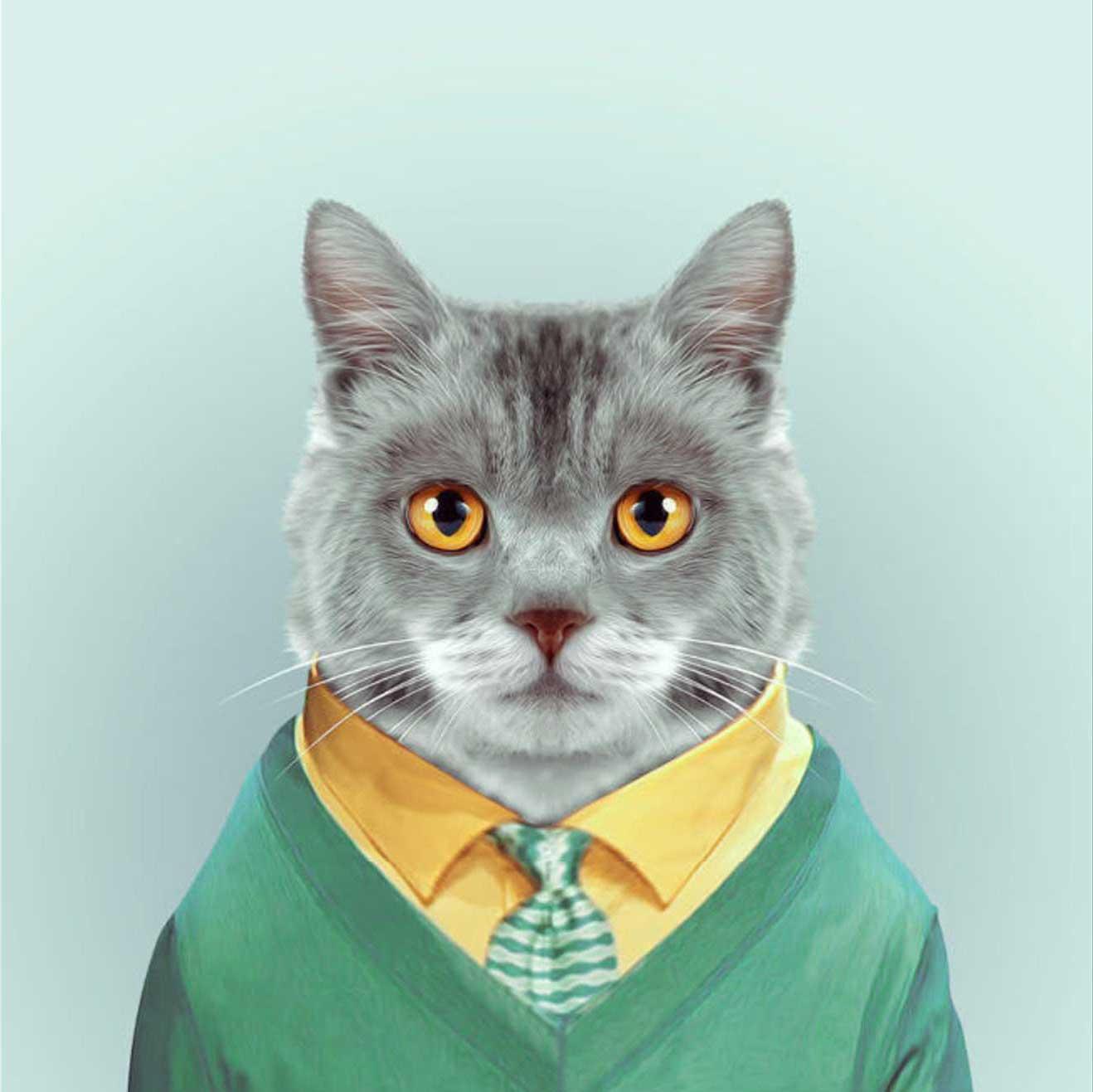 кот в галстуке картинка