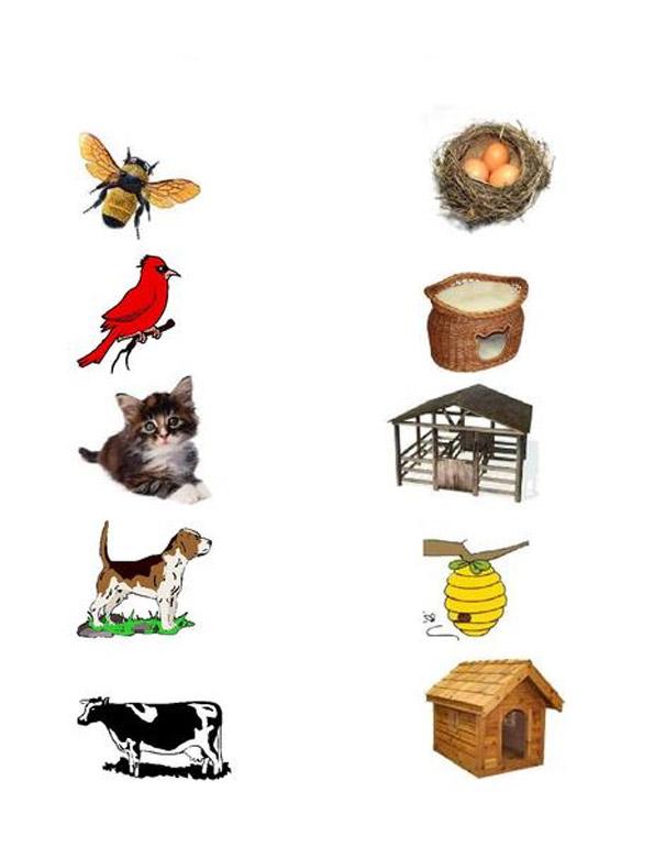 """Картинки животных """"кто где живет"""""""